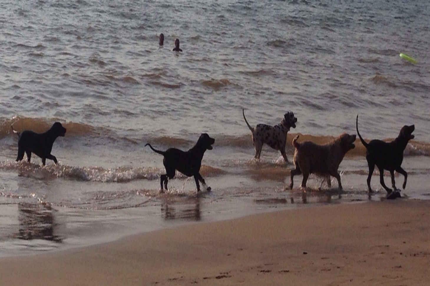 Beach-Dogs-1650_2-3