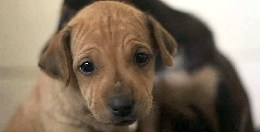 Sad-Puppy452
